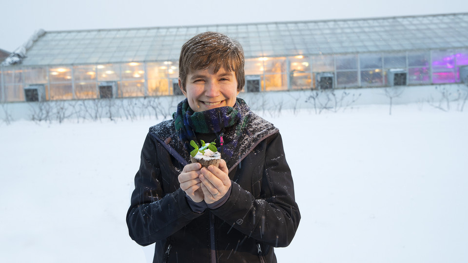 NSF award boosts Roston's research into freeze-tolerant crops