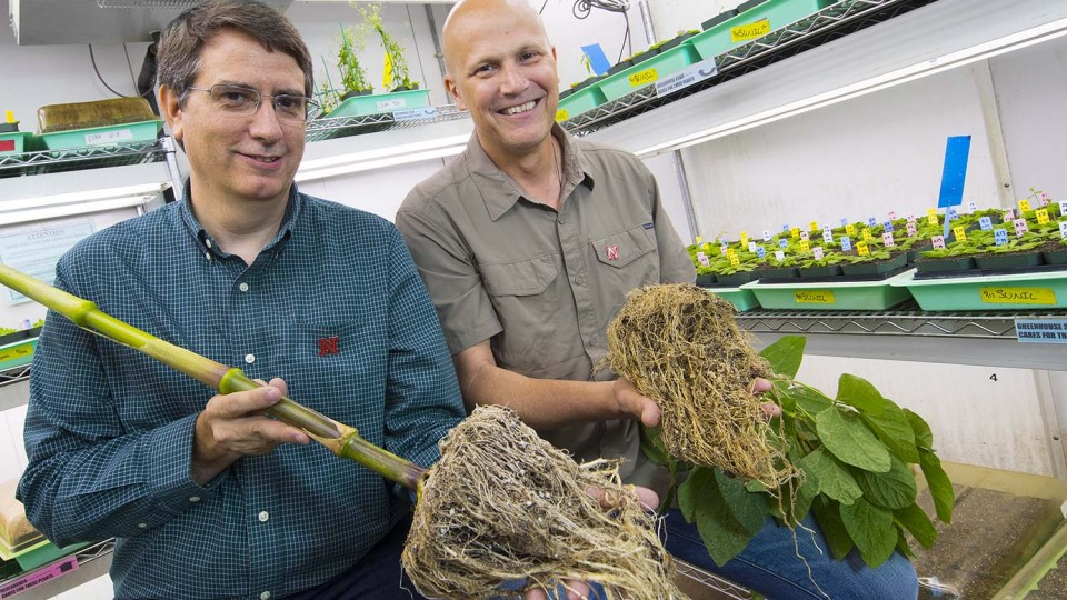 UNL earns $20M award for partnership to improve crop productivity